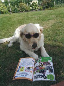 Oona, le chien de Lily